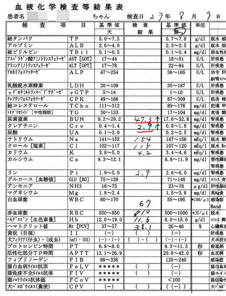 2015/8/9クロの血液検査結果
